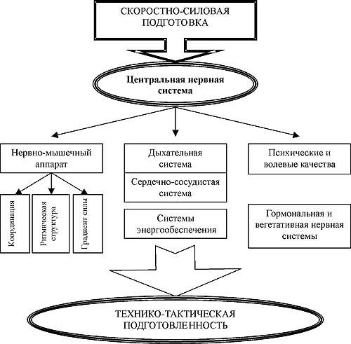 Рис. 3. Схема формирования функциональной специализации основных систем организма.