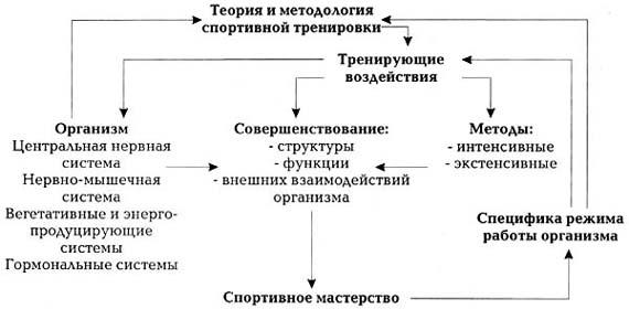 Схема, иллюстрирующая роль